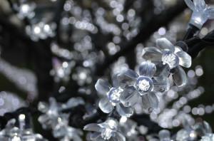 iceflowers