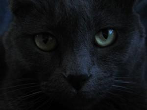 cat-746242_1920